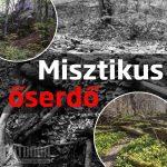 Misztikus őserdő gyalogtúra a Bakonyban
